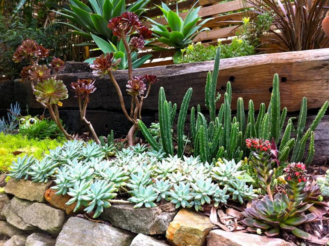 Low maintenance plants that will bloom year round for List of low maintenance plants