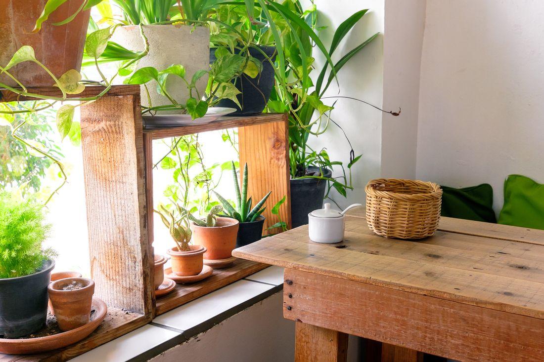 Indoor Garden Lighting Part - 31: Making The Most Of Natural Light
