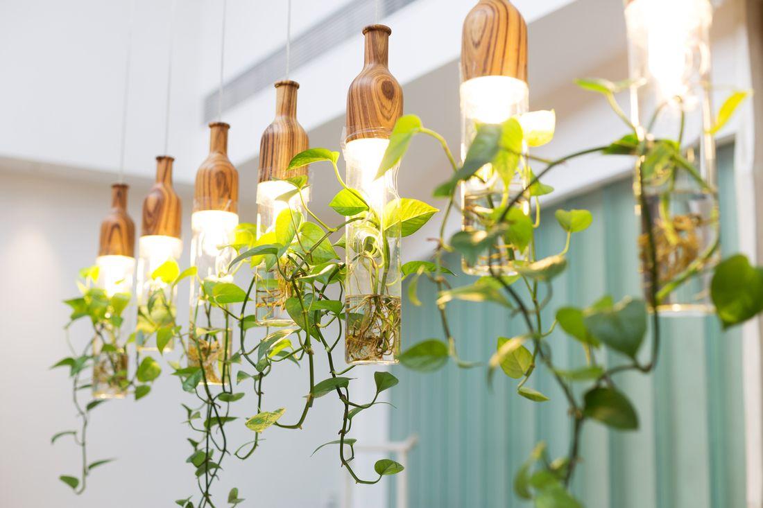 Indoor Garden Lighting Part - 20: Lighting For Indoor Gardening - Hipages.com.au