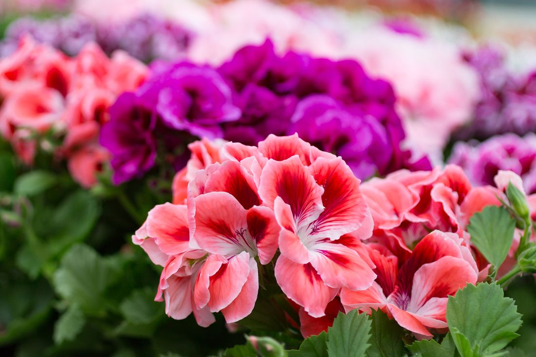 Flowering Plants That Love To Grow In Winter Hipages