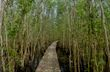 Melaleuca tea tree