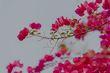 Flowering tropical plants