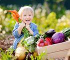 Eating in Season 101: How to Create Healthy Eating Habits