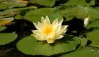 Naturopathy for Infertility