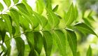 Popular Ayurveda Herbs