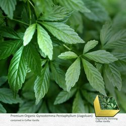 GYNOSTEMMA PENTAPHYLLUM: Increases strength, stamina, energy, improves the emotional state and balances the body