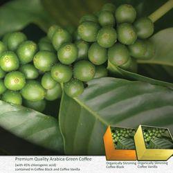 ARABICA GREEN COFFEE: Antioxidant, has many benefits, the power  of 45% chlorogenic acid, helps to burn fat  fast