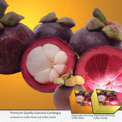 GARCINIA CAMBOGIA: A clinically proven natural fat burner,  suppresses the appetite, curbs food cravings, inhibits fat absorption