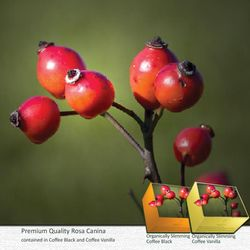 ROSA CANINA: Contains a concentrated form of vitamin C, its anti-inflammatory properties make it a natural treatment for osteoarthritis