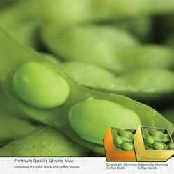 GLYCINE MAX: Excellent source of dietary protein, contains essential amino acids, acts as a cholesterol lowering agent
