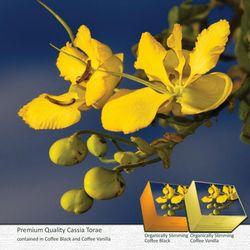 CASSIA TORA: acts as a liver stimulant, mild laxative,  heart tonic and helps improve skin ailments