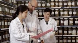 Herbal Medicine History