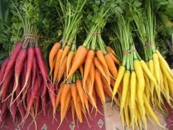 Carrots multicoloured