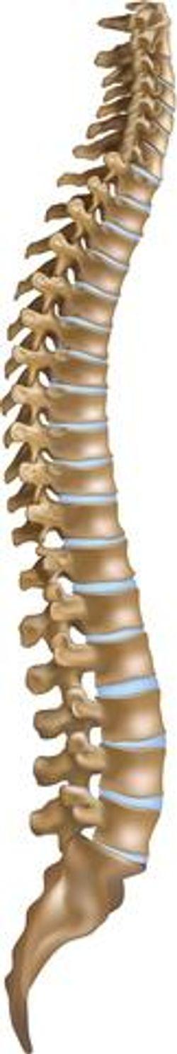 An Ideal Spine