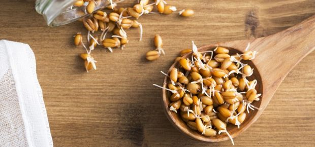 Sprouted Grains 101